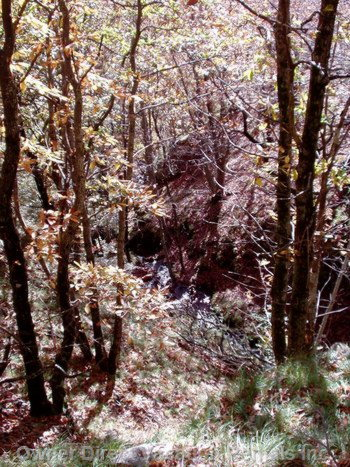 In the Forest - a Glimpse of the Torrente below