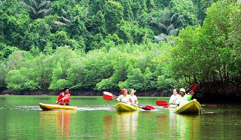 Kayaking 1 Day Tour along the River in the Mangrove Forest + Koh Bubu + Koh Talebang on the West Side of the Island.  1,200 per Person