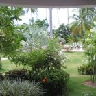 View from the Bedroom into the Tropical Garden