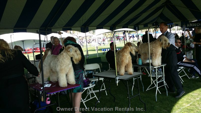 2019 January Visit and Enjoy Or Participate in our World Wide Dog Show 10 Min Drive from Condo