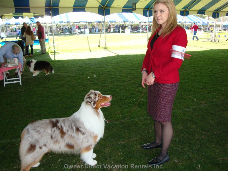 2016 Dog Show: 1st Place Winner in her Category