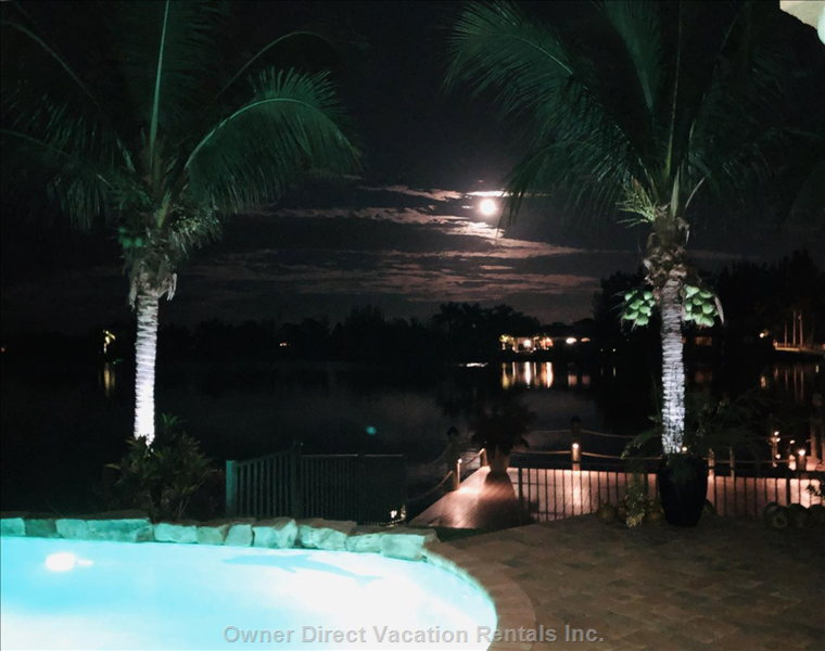 Swimming under a Tropical Moonlit Sky
