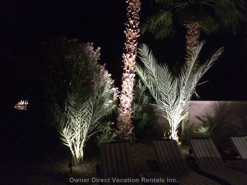 Backyard Landscape Lighting