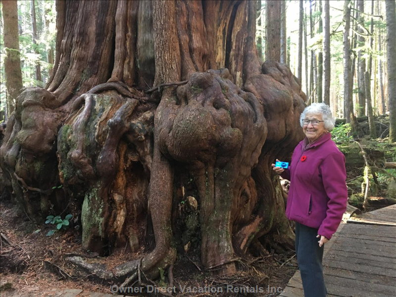 Mum in Avatar Grove at another one of their Gnarly Trees