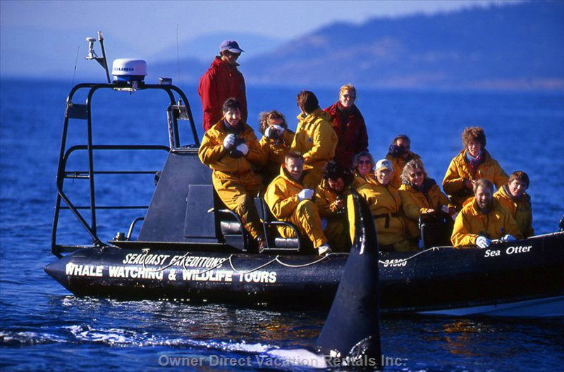Whale Watching is Available within a Short 5 Minute Drive of our Property