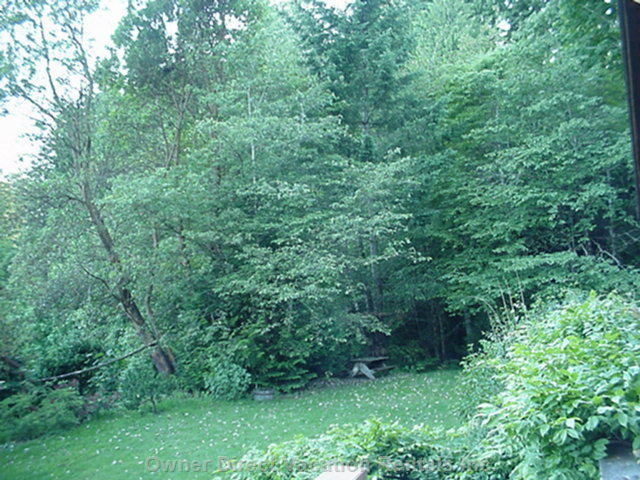 Trees in Yard