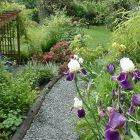 Outside Path to Suite - Iris in May along the Path...