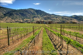 A vineyard in Osoyoos, BC ID#204375