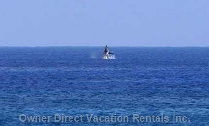 A Guest Captured this Whale Breeching from the Lanai