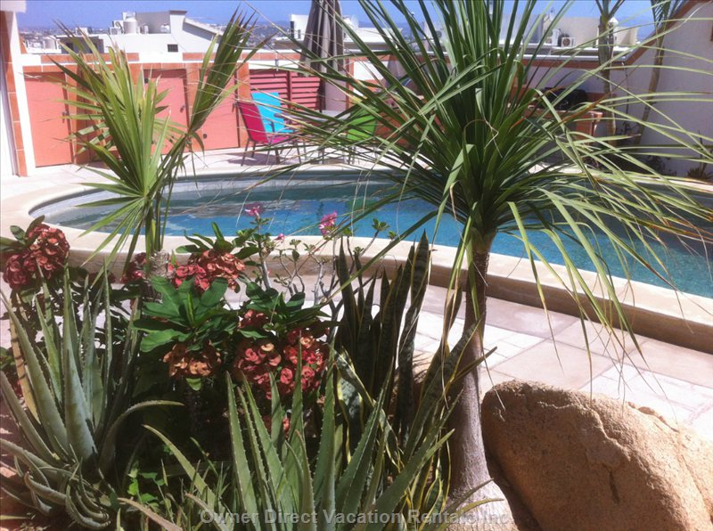 Enjoy the Bromine Pool in the Garden Patio Atmosphere.