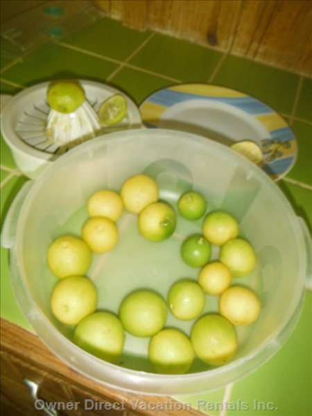 Limes from the Yard